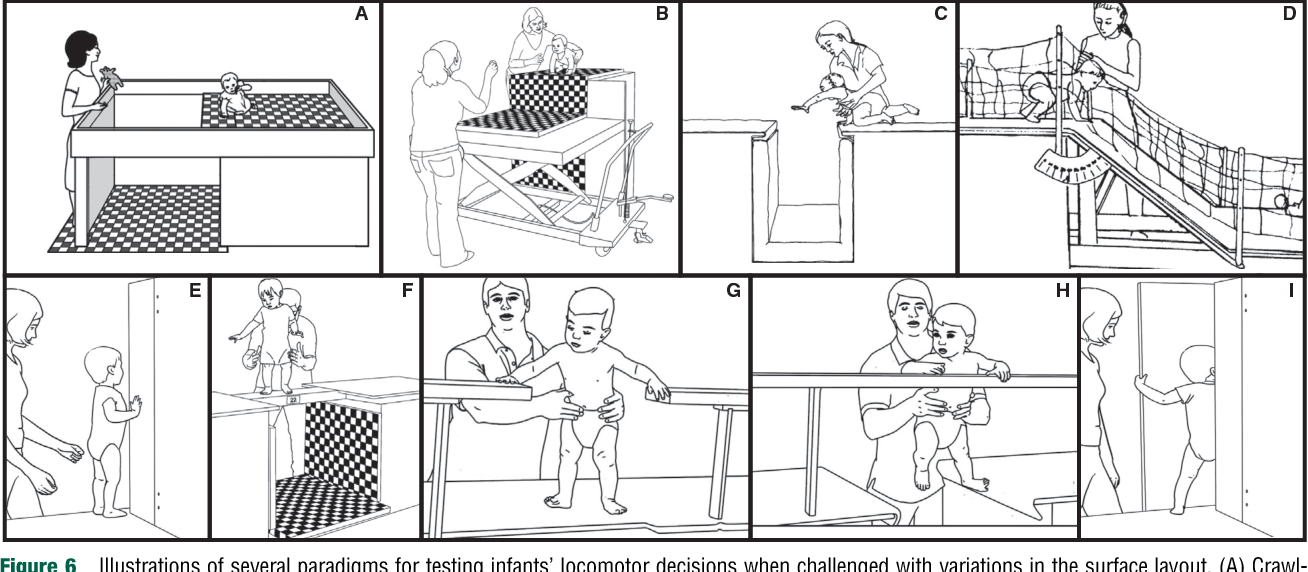 Figure 1 from Motor and Physical Development : Locomotion
