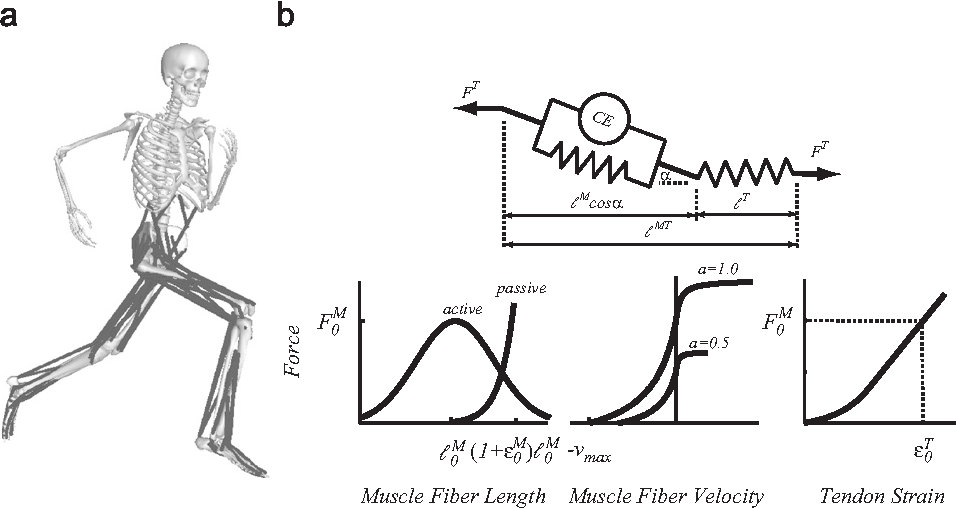 Figure 3 from The effect of speed and influence of