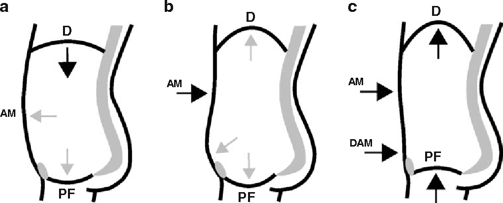 Figure 1 from Breathing with the pelvic floor? Correlation