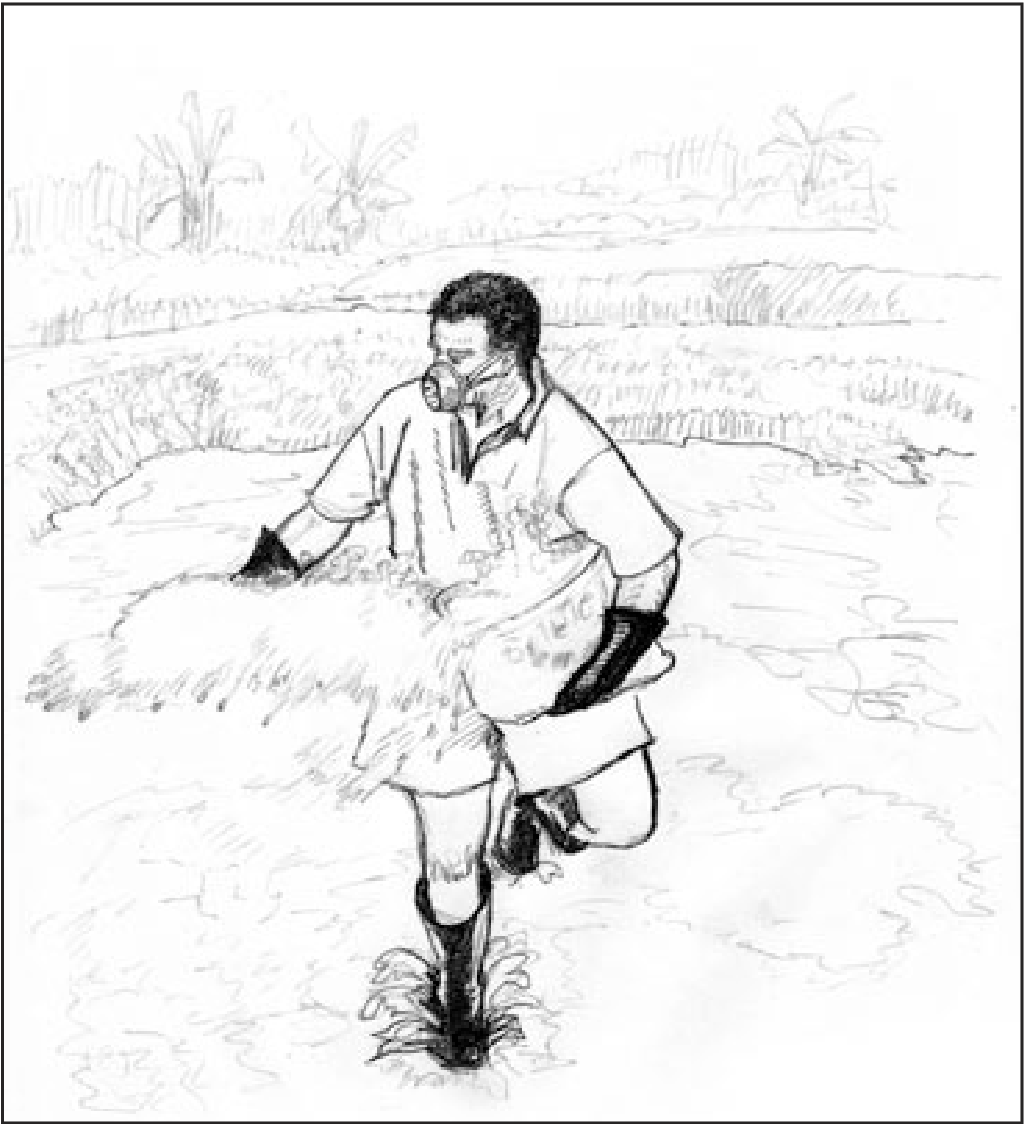 Figure 1 from Tilapia fish farming in Pacific Island