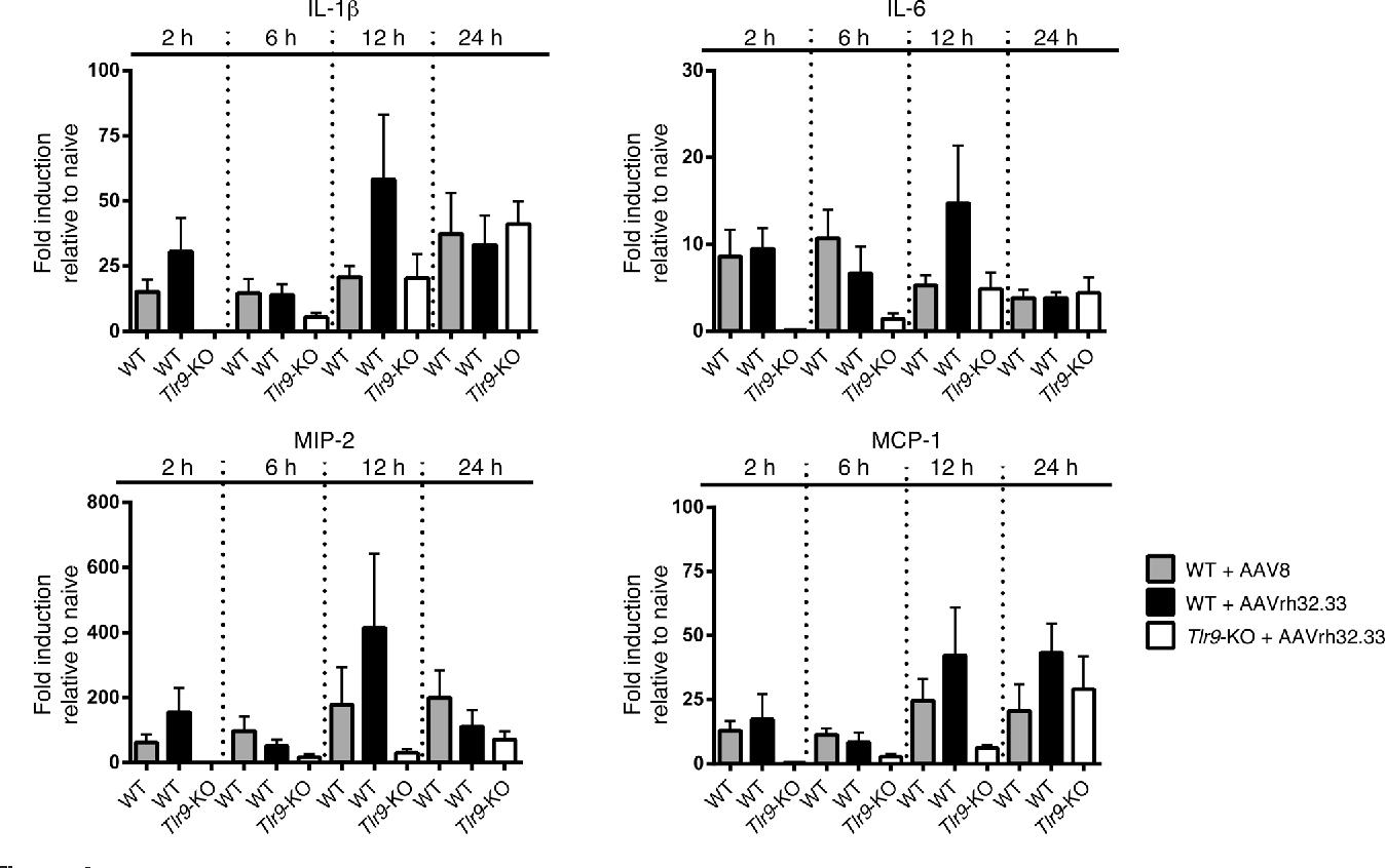 [PDF] CpG-depleted adeno-associated virus vectors evade