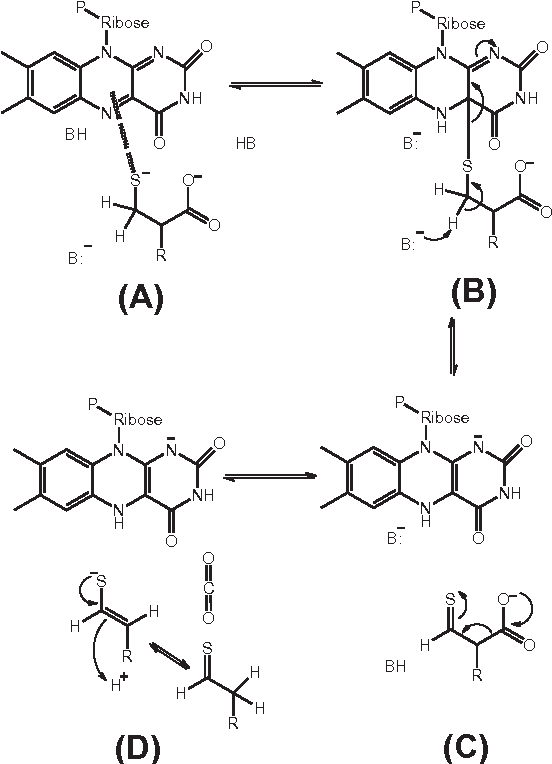 Figure 3 from Decarboxylation mechanisms in biological