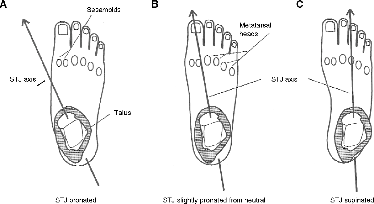 Figure 22 from Subtalar joint axis location and rotational