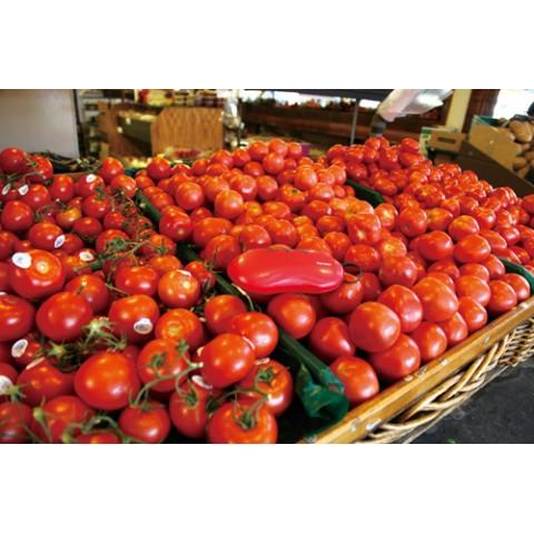 トマト 採れたてフルーツ&ベジタブルケース