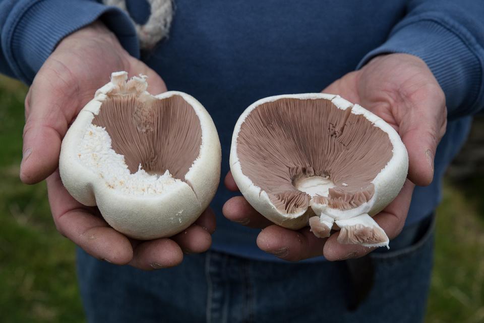 Foraged Fungi (Backblip)