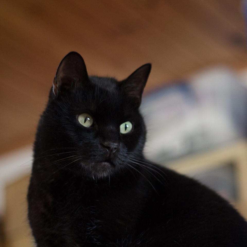 365:43 The Gratuitous Cat