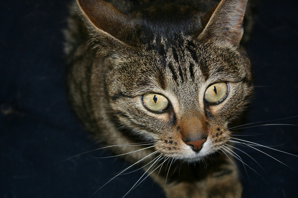 Scarycat (backblip)
