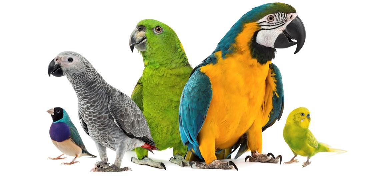 bird basics pets 4