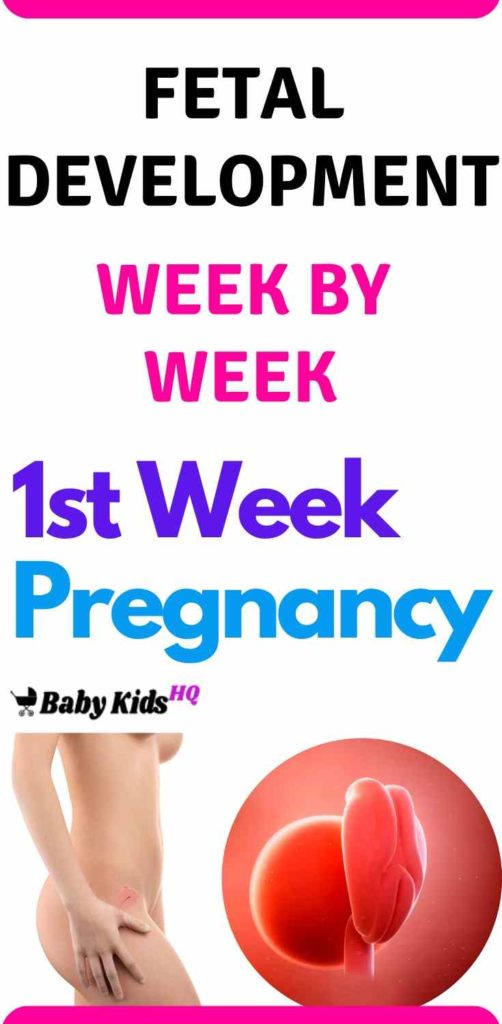 Baby Development In Womb: 1st Week Pregnant