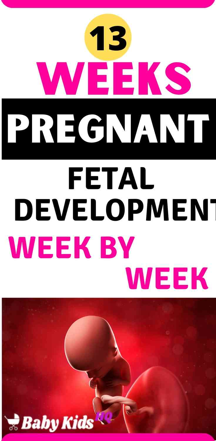 Baby Development In Womb 13 Weeks Pregnant