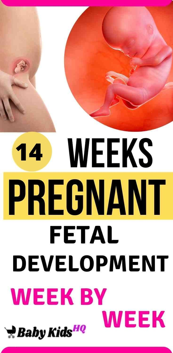 Baby Development In Womb: 14 Weeks Pregnant 1