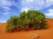 Can we use native plants to predict floods? - Australian Geographic