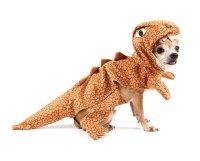 10 most popular dog Halloween costumes in Australia ...