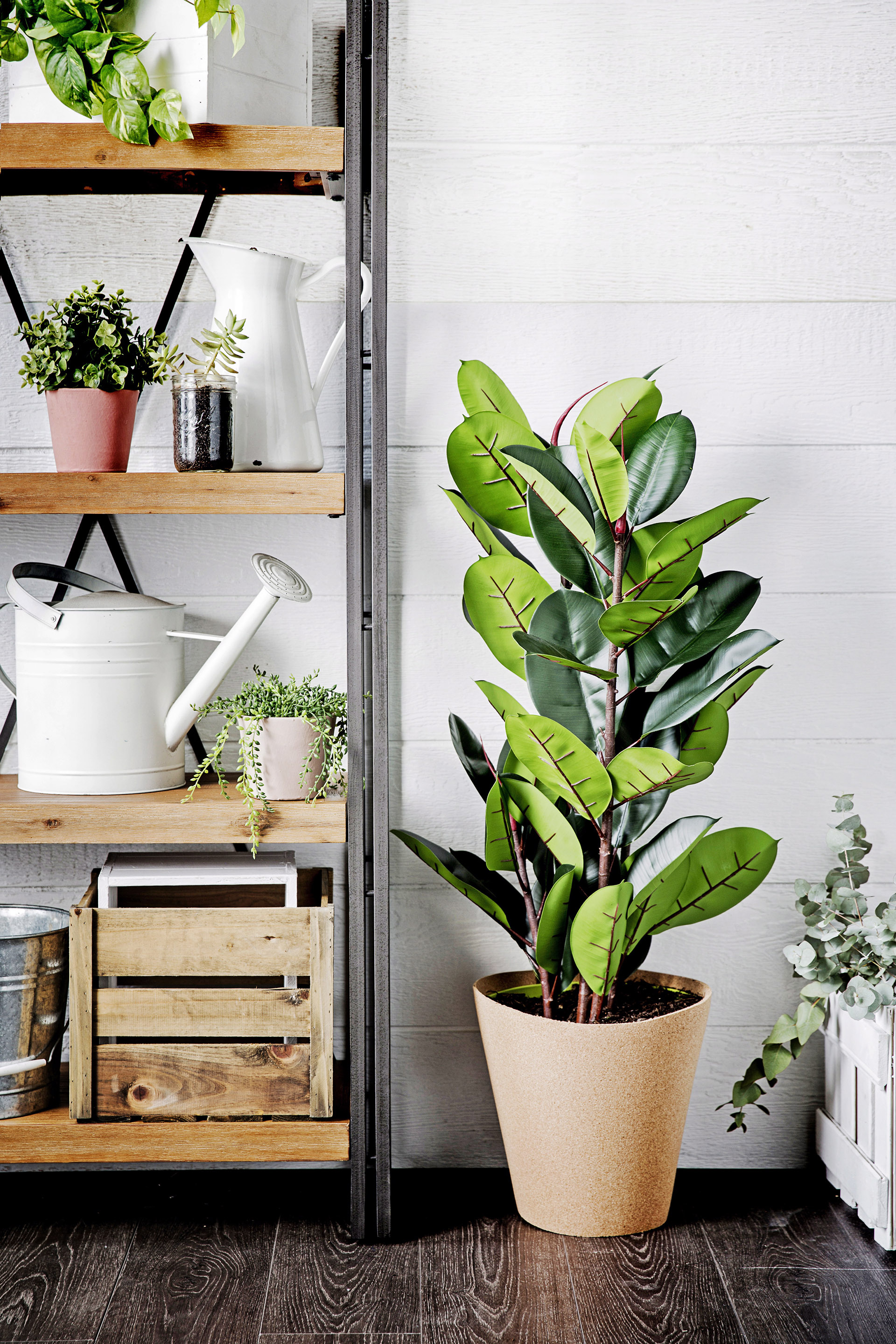 Why you should clean your indoor plants regularly   Homes ...