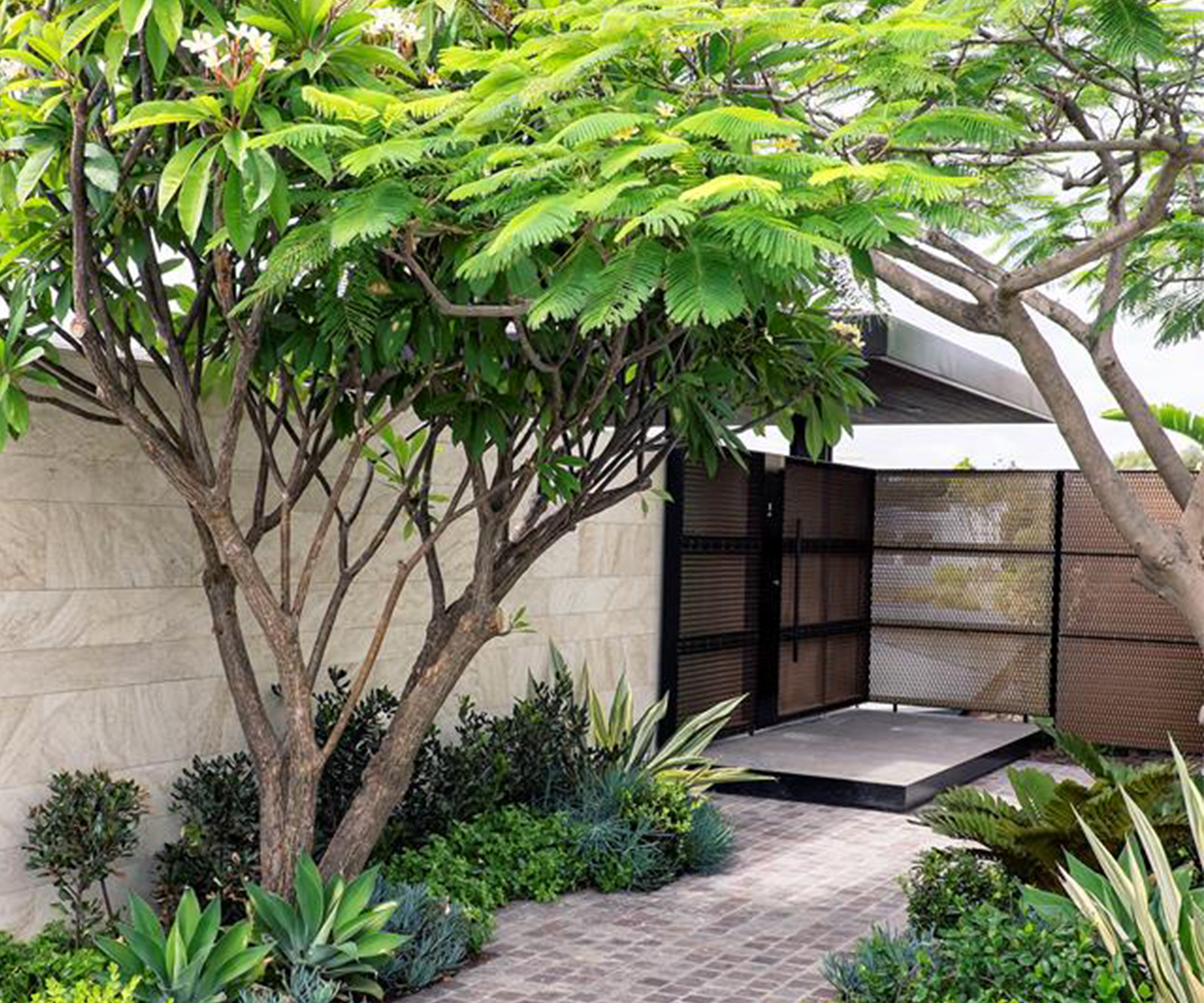 10 trees to plant in backyards big or