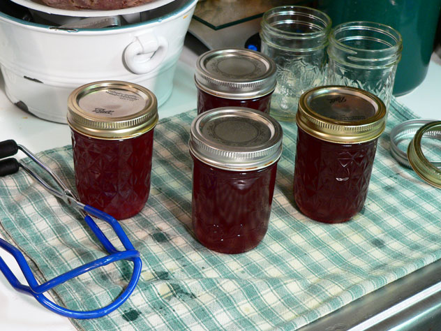 """Place the jars on a folded towel in a draft free location. Do not place the jars directly on your counter top, especially a granite or marble type top. The jars are hot and placing them on a cold counter could cause them to burst. Give the jars plenty of space and just let them stay in this spot for 24 hours undisturbed. This is the fun part, as you start counting the """"ping"""" sound the jars make as they seal. Resist the urge to press down on the center of the jar lid until the 24 hours have passed. If you don't hear all the jars make that ping sound, don't fret it. The jars may still have sealed. Just wait the 24 hours then press down on the center of each lid. If the center button springs up and down, the jar is not sealed. You should place that jar in the refrigerator and use it first, it's still good. If the button remains down, the jar is properly sealed and can be safely stored for up to one year in a dark and cool location. It's best to remove the band from the jar before you store them. This will prevent the bands from rusting and sticking, making them difficult to remove. Also, place the jars on one row and do not stack anything directly on top of them. Removing the bands can also help you later in finding any jars that might have lost their seal after a period of time. It happens occasionally, and that food will need to be disposed of properly. By removing the band, the lid can raise up if it loses it seal and you'll be able to find it easily. The same thing applies by not sitting the jars on top of each other."""