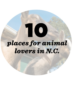 10 places for animals lovers in NC