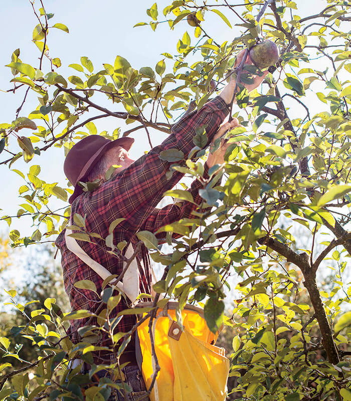Heirloom Apples Thrive at Big Horse Creek Farm