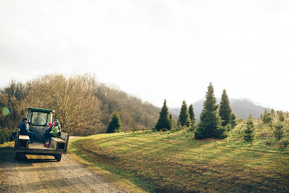 Photo Essay: In Pursuit of the Perfect Pine