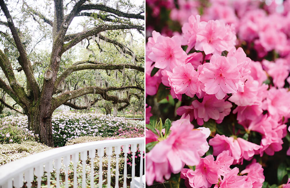 Photo Essay: An Abundace of Azaleas