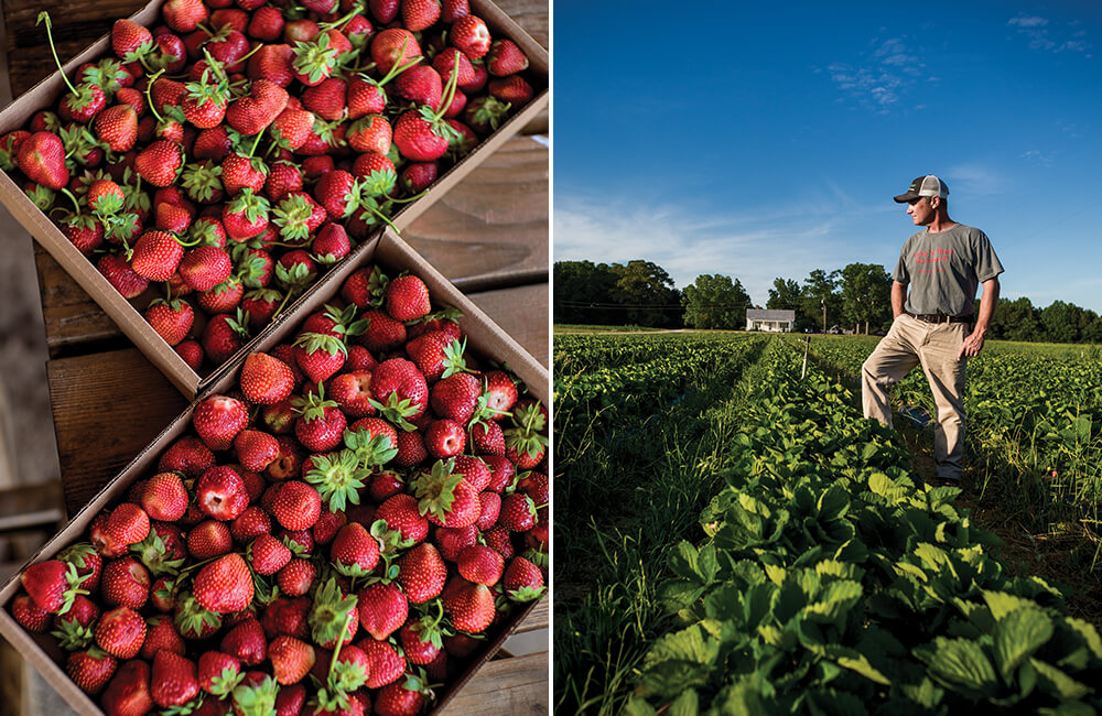 Photo Essay: 7 Strawberry Patches Ripe for the Picking