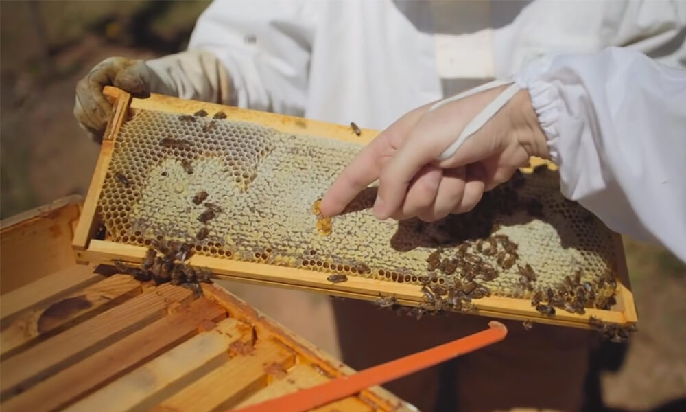 Best-Kept Secrets in Asheville: Asheville Bee Charmer