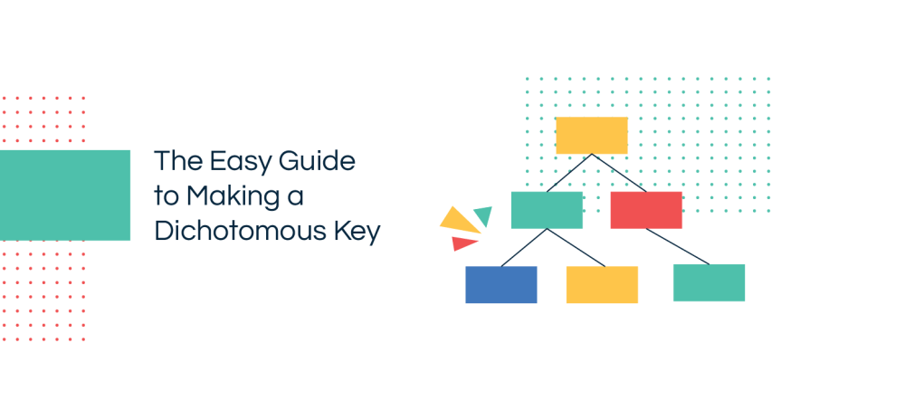 medium resolution of What is a Dichotomous Key   Step-by-Step Guide with Editable Templates