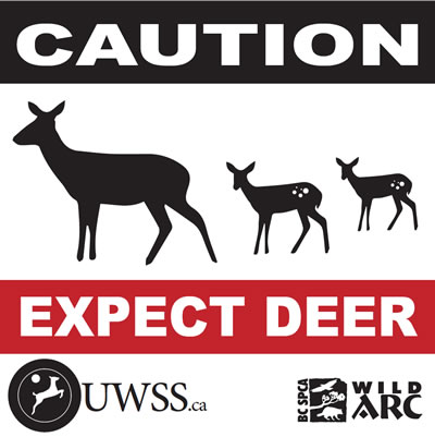 Vehicle-deer collisions