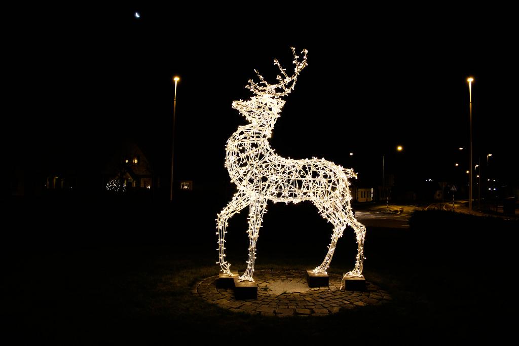 deer-lights.jpeg
