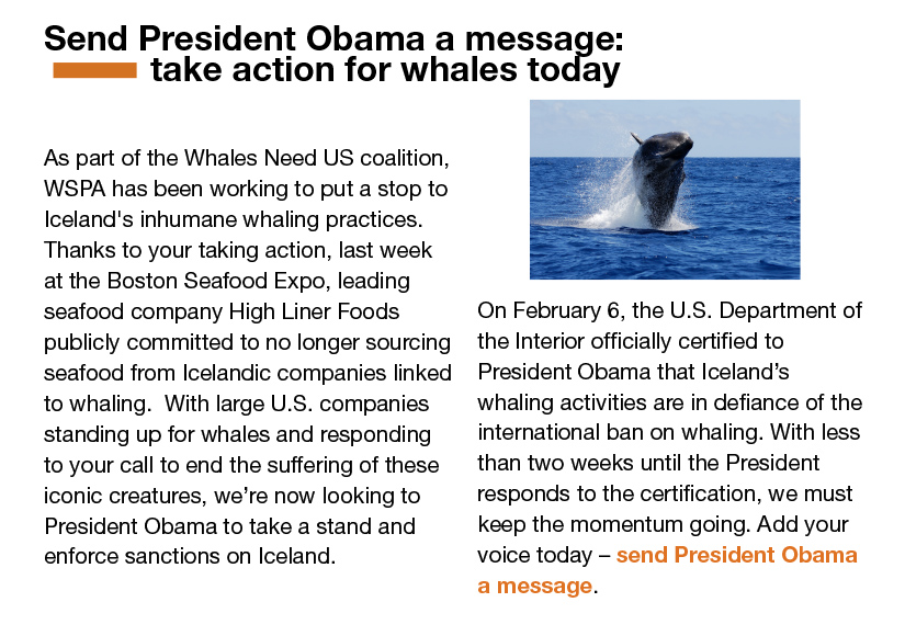 March-Newsletter-Slices_04_whale_story.jpg