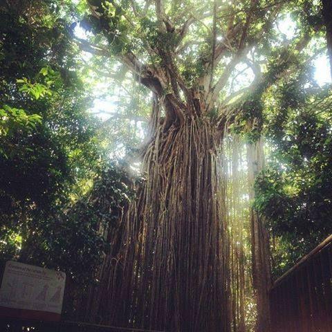 Tableland's Rainforests Day Tour