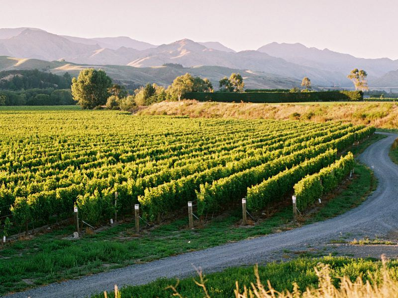 Full-Day Wellington and Martinborough  Wine Tour