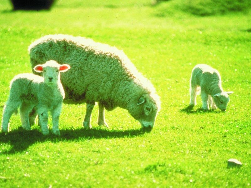 Sheep Farm Day Tour From Christchurch