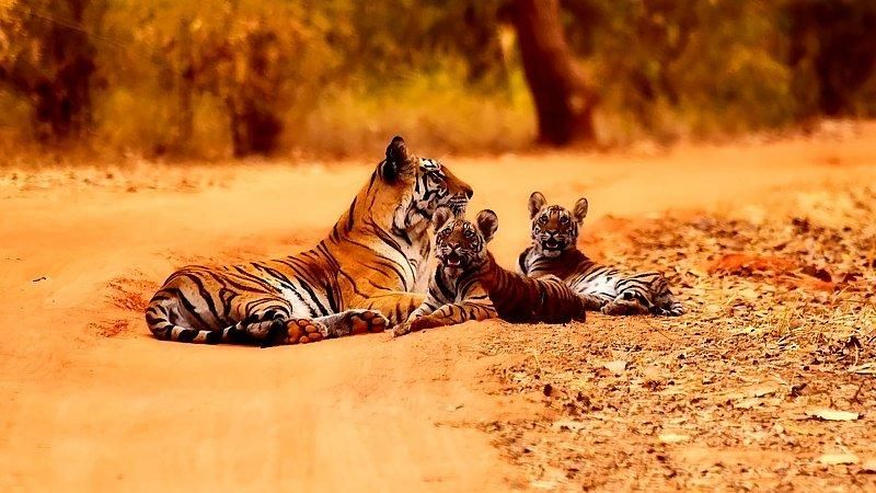 11-Day Temples & Tigers of India Tour