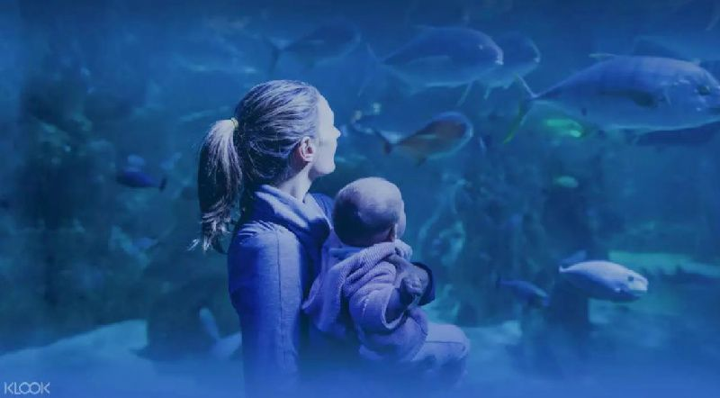 Sea Life Sydney Aquarium Entry Ticket - Foreign Nationals Only