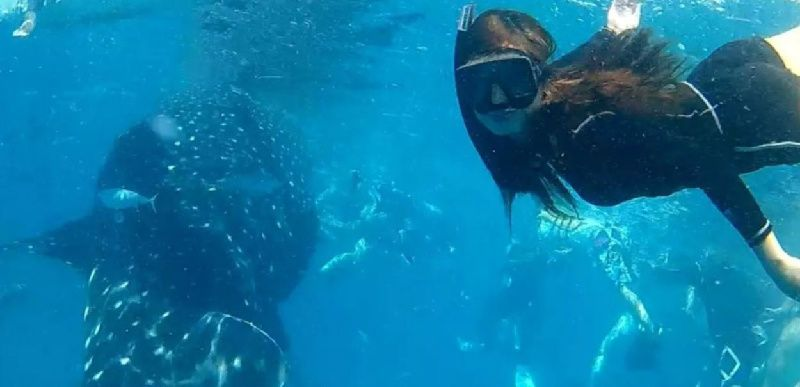 1-Day Oslob Whale Shark Watching Tour