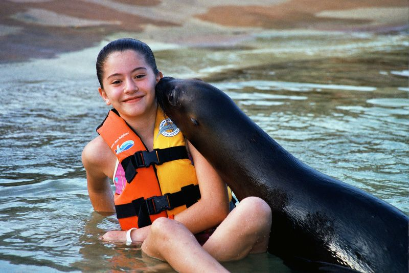 Swim with sea lions with Dolphin Discovery