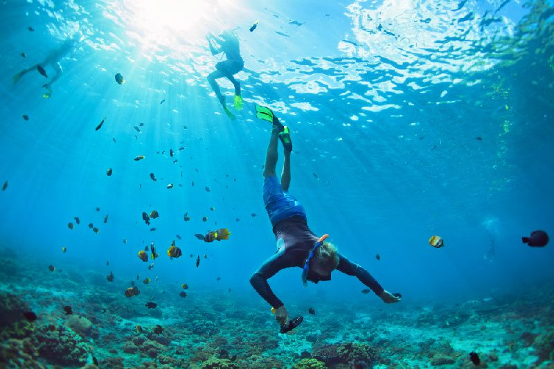 Marine world + Guided Snorkel Tour From Cairns