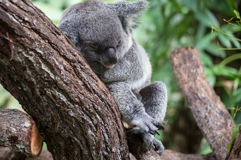 Kuranda All Inclusive with Gold Class From Cairns