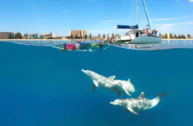 Half-Day Adelaide Dolphin Cruise (Swimming or Watching)