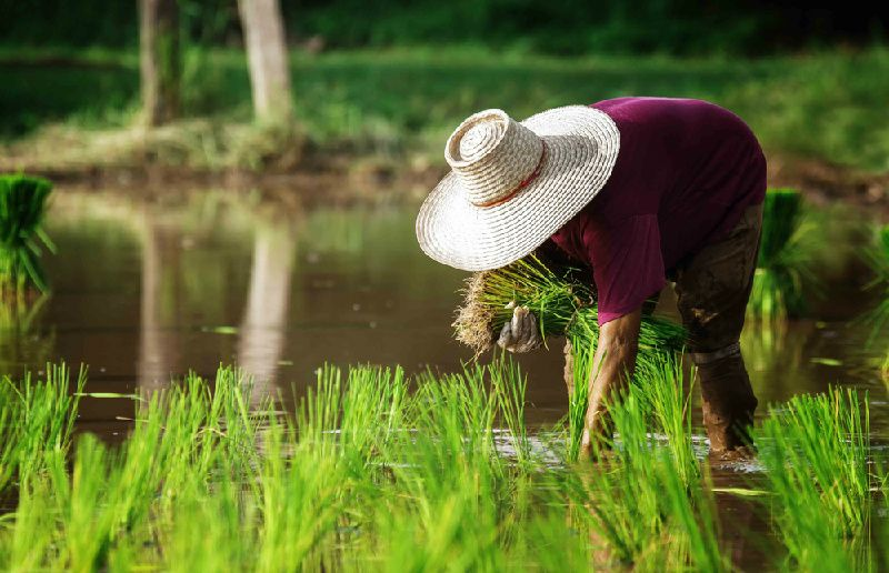 1-Day Private Countryside Organic Farm Tour from Kuala Lumpur including Organic Lunch