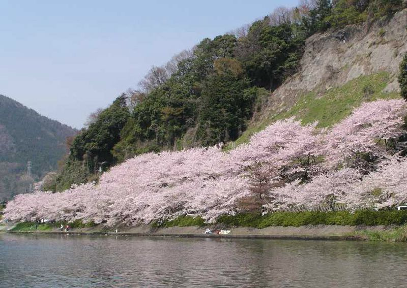 Shiga Cherry Blossoms and Strawberry Picking Day Tour from Kyoto