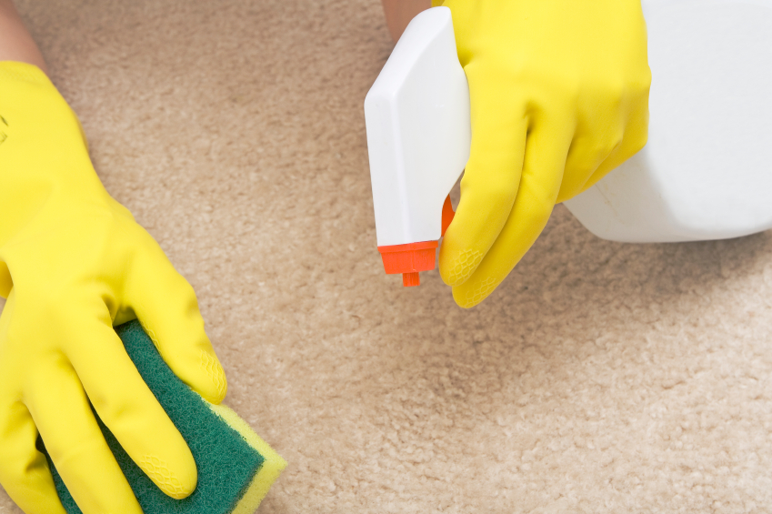 Pet Stain Removal Guide