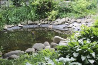 Backyard Ponds: Cleaning and Maintenance | Blain's Farm ...