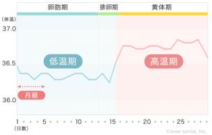 【740px】基礎体温表
