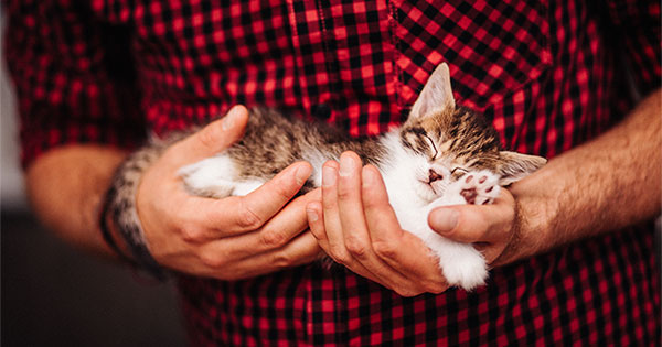 Selling Your Home? Is Your Listing 'Pet-Friendly'?   Keeping Current Matters