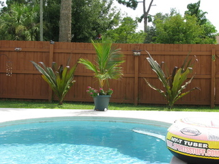 Tropical Poolside Renovation!