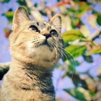 Cute cat on the tree ~ Animal Photos on Creative Market