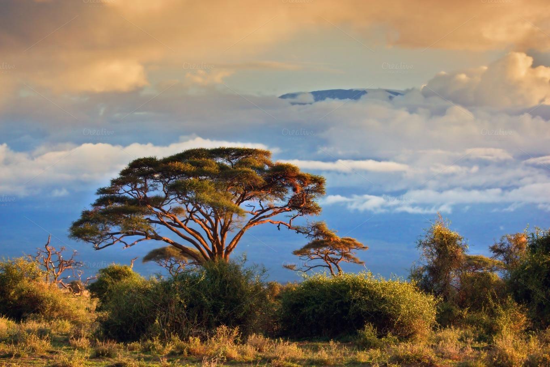 african savanna landscape nature