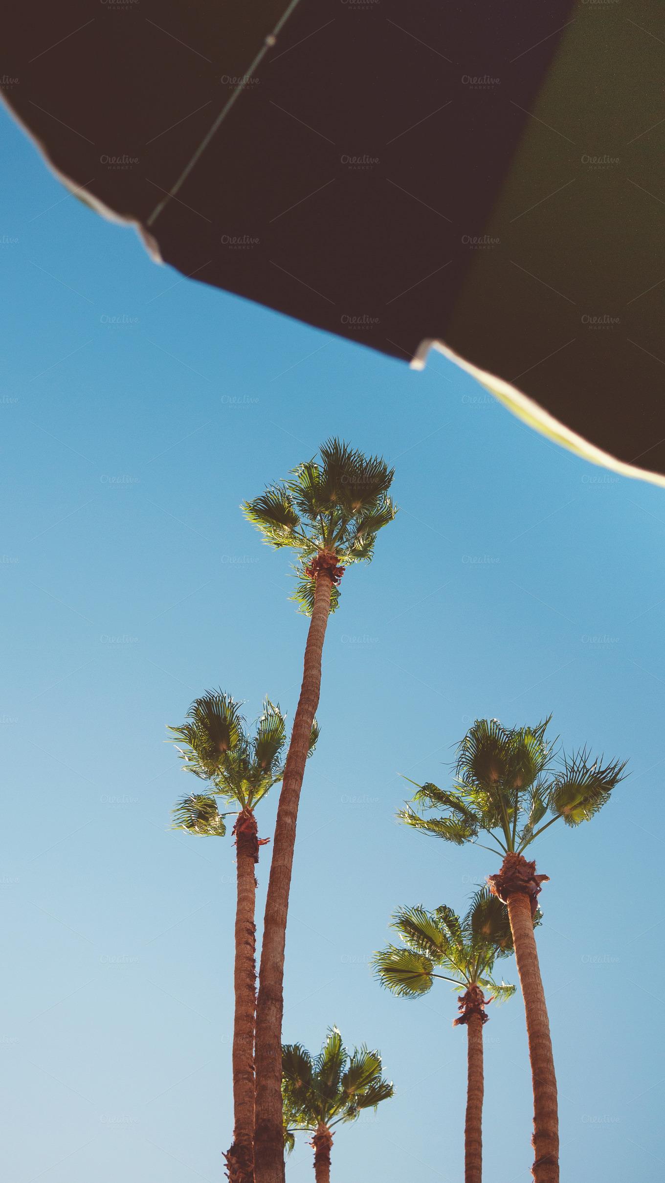 Palm Trees Under Umbrella Nature Creative